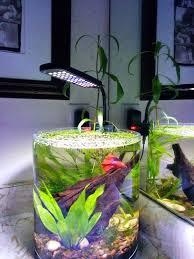 Beta Fish In Vase 35 Best Aquarium Ideas Images On Pinterest Aquarium Ideas Fish