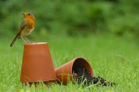 welcome wildlife to your garden