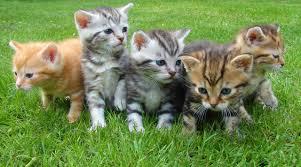blog resources articles atlantic veterinary hospital seattle