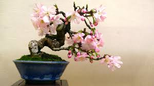 tree symbolism bonsai symbolism