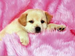 cute dog wallpapers cute dog wallpaper little 10627 wallpaper walldiskpaper
