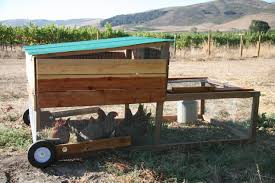 how and why we built a chicken tractor