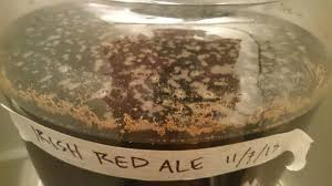 advice on killing a consistent lacto infection homebrewing