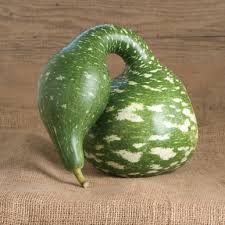 goose gourds speckled swan gourd seed johnny s selected seeds