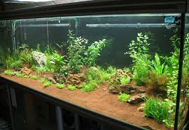 aquascaping home aquarium design with glass panels and wooden