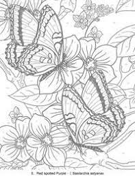detailed butterfly coloring pages for adults fantasy pages for adult coloring butterfly color page animal