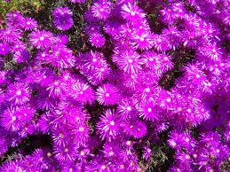san diego flowers rockchaser retina scorching flowers of san diego