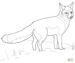 swift fox coloring page free printable coloring pages