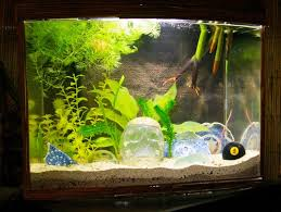 small atank decorations awesome house tropical fish tank