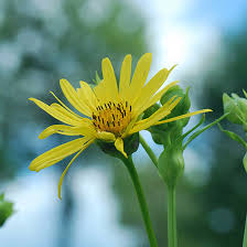 Yellow Flower - top 25 most beautiful yellow flowers