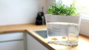 self watering indoor planters self watering herb kits mini herb garden