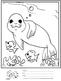 coloring page seal swimming with fish coloring pages pinterest
