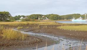study finds crabs destroying coastal saltmarshes in rhode island