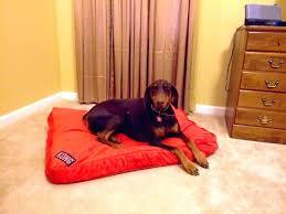 Kong Dog Beds Kong Dog Bed Kong Dog Bed In Purple Perfect For Oreo Wishbone