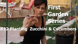 first garden 12 planting zucchini and cucumbers and easy