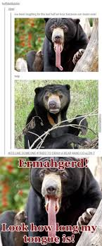 Hairless Bear Meme - they are god s creation and we shouldn t judge them dies of the