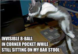 Invisible Cat Meme - 26 hilarious pictures of cats doing invisible things