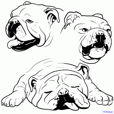how to draw a bulldog english bulldog step 1 สต กเกอร pinterest