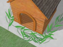 how to control fleas with eucalyptus trees 3 steps