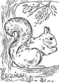 realistic picture squirrel coloring download u0026 print