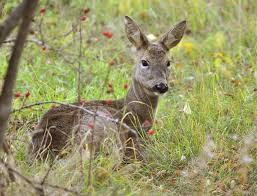 deer resistant gardening learn how to create a deer resistant garden