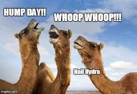Hump Day Camel Meme - hump hydra hail hydra know your meme