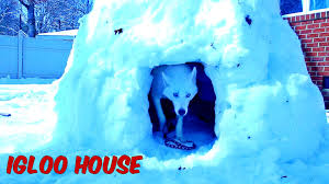 Are Igloo Dog Houses Warm How To Make Igloo House Youtube