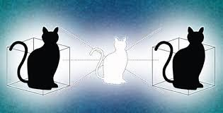 new quantum cat state can be in two places at once