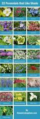 10 Best Perennials And Flowers by Shade Loving Flowers Melbourne Clanagnew Decoration