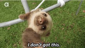 Angry Sloth Meme - funny sloth gif 7 gif images download