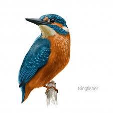 bird vectors photos and psd files free download