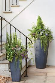 Shrubs For Patio Pots 25 Trending Container Gardening Ideas On Pinterest Gardening In