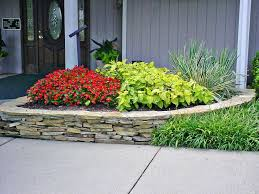 How To Grow Coleus Plants by How To Grow Coleus Plants