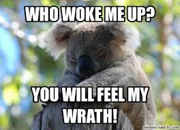Koala Meme - cute koalas memes image jpg koalas pinterest adorable