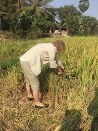 field dans ta chambre khmer angkor villa siem reap cambodia booking com