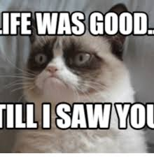 Grumpy Cat Coma Meme - 25 best memes about grumpy cat school grumpy cat school memes