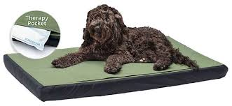 Comfortable Dog Tripawds Gear Best Recommended Dog Beds For Post Surgery