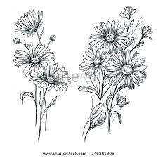 hand drawn line art watercolor chamomile stock illustration