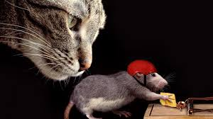 cat and rat cheese mousetrap animal wallpaper 14341