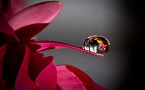 drops petal tip drop hd nature wallpapers for android phones free
