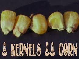 5 kernels of corn psalm 103 1 5 thanksgiving free powerpoint