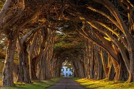 18 gorgeous tree tunnels around the world apexpics