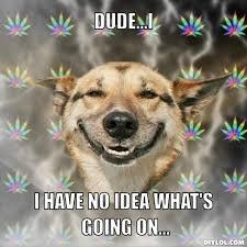 No Meme Generator - image stoner dog meme generator dude i i have no idea what s going