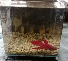 Betta Fish Vase With Bamboo Why Betta Bowls Are Bad Aquariadise