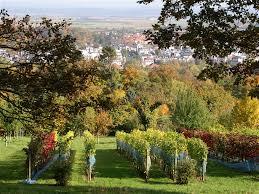 Aldi Bad Nauheim Weinbau Am Johannisberg Bad Nauheim
