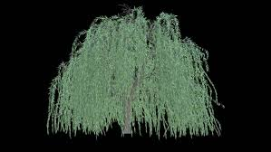 tree plant in wireframe hologram style 3d rendering stock footage