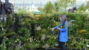 woolly pockets plants thrive at bbc gardeners u0027 world living walls