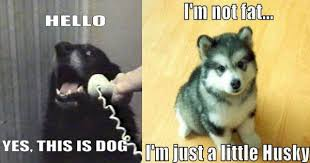 Yes This Is Dog Meme - win meme epic win photos cheezburger