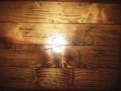 Powder Post Beetles In Hardwood Floors - termite treatment u0026 control charlotte nc charlotte