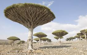 the lost world of socotra a remote island with plants up to 20